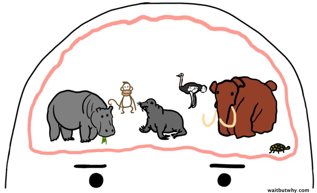 normal-animal-brain1