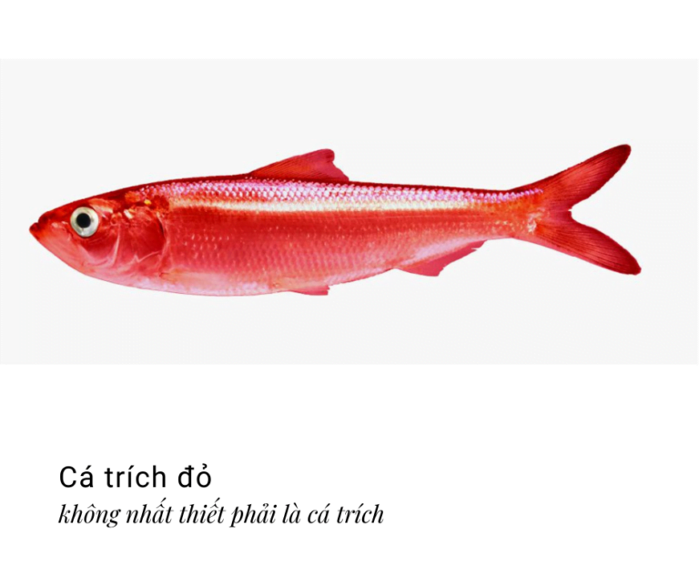 Cá trích đỏ