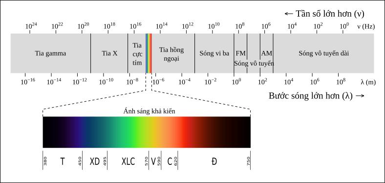Phổ điện từ gồm có: tia gamma, tia X, ánh sangs khả kiến, tia hồng ngoại, sóng vi ba, sóng vô tuyến (gồm có sóng FM và sóng AM), sóng vô tuyến dài